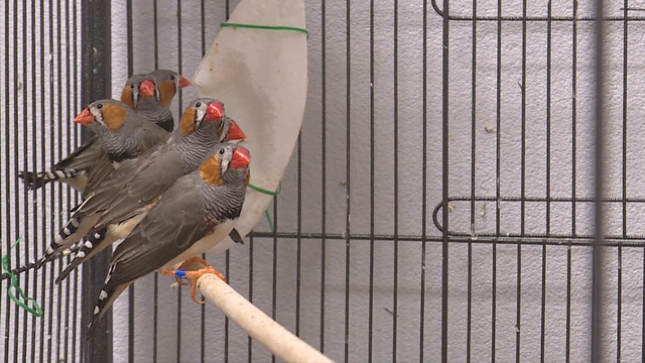 Nashville Scientists Using 'Mini Recording Studios' To Study Bird Sounds