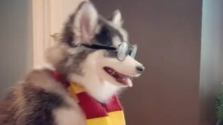 This Hilarious Video Shows A Dog Dressed As Harry Potter Riding A Roomba Vacuum