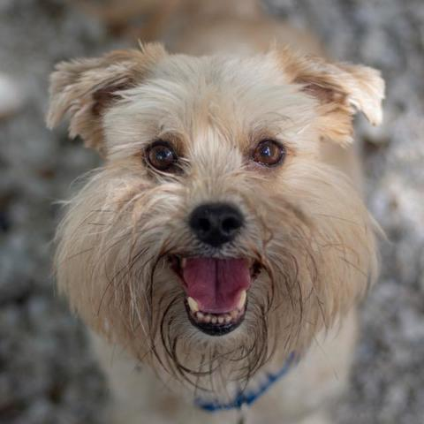 PHOTOS: 20+ adoptable pets in the Tampa Bay area for the weekend of June 15