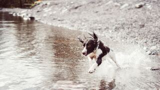 Dog splashing in water