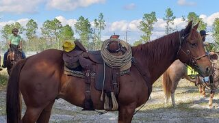 Collier County mounted Hondo.jpg