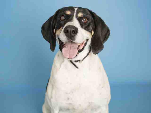 Adoptable pets from Arizona Humane Society and Maricopa County Animal Control (2/21)