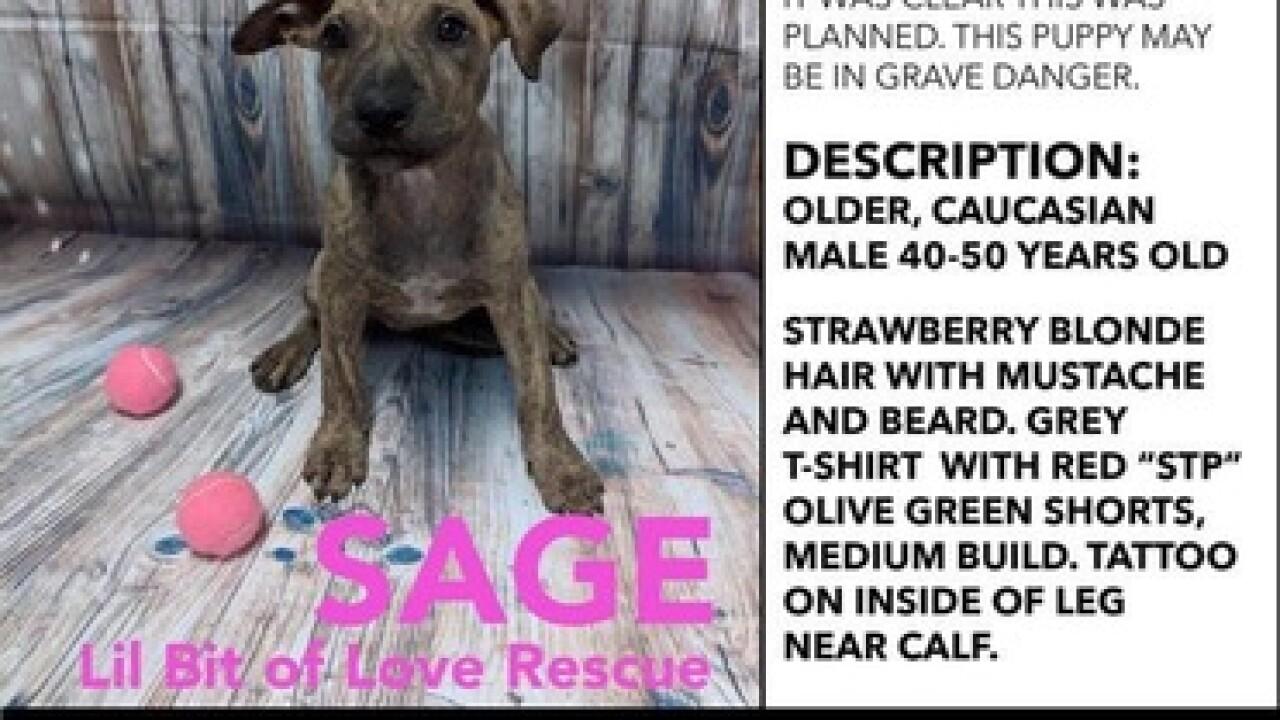 10-week old puppy stolen in front of PetSmart
