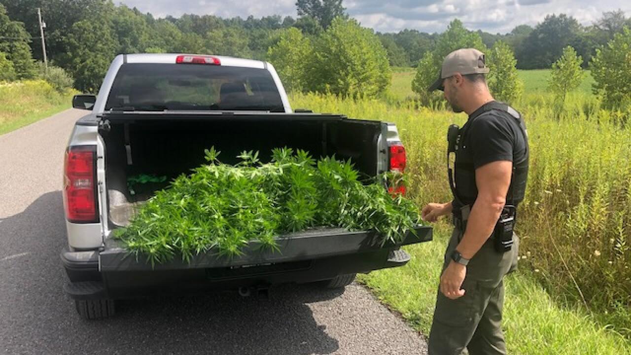 Wayne County marijuana bust