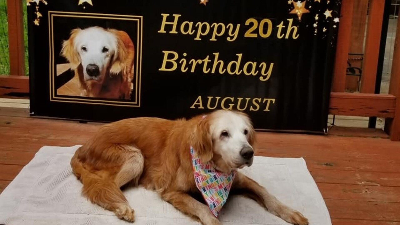 Dog believed to be oldest living golden retriever after celebrating 20th birthday