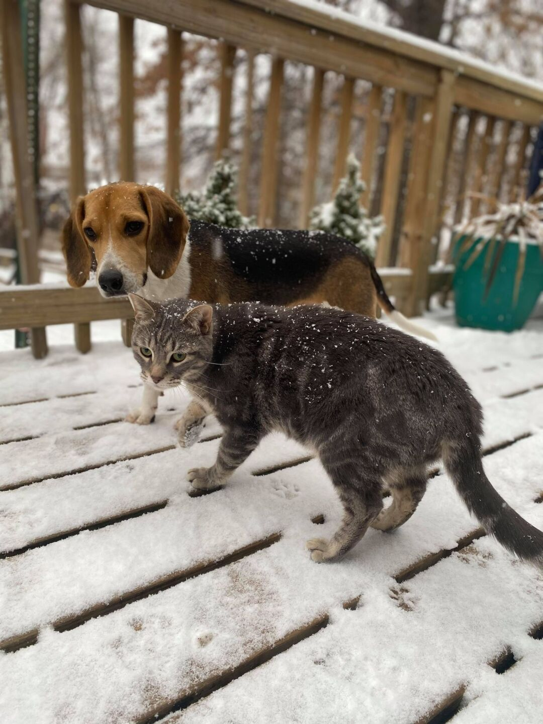 Dunder and Oliver in snow.jpg