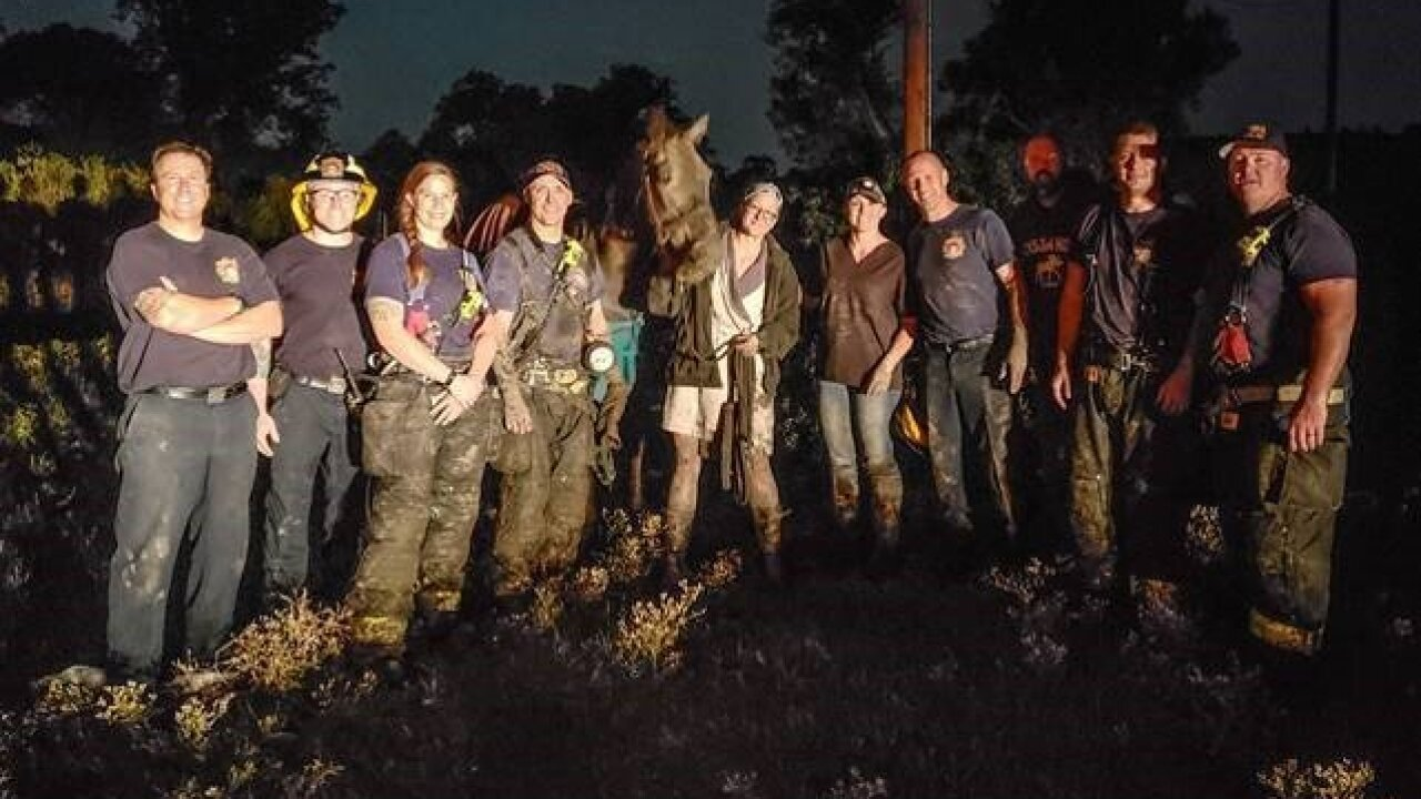 Firefighters rescue horse stuck in mud