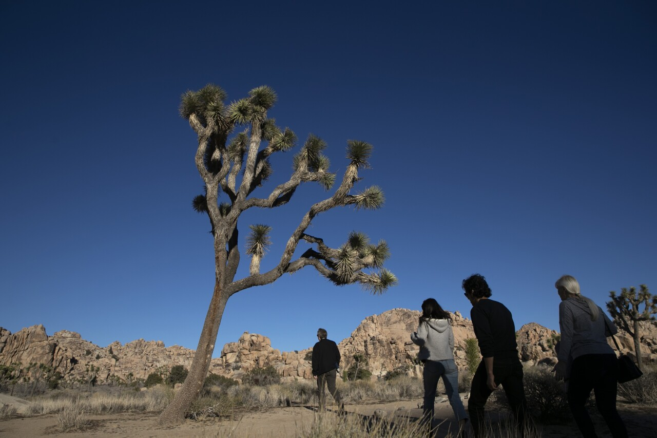 CA Virus Outbreak Joshua Tree Reopens