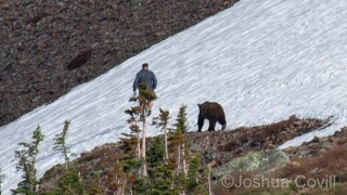 Hiker has close call with grizzly bear in Glacier National Park