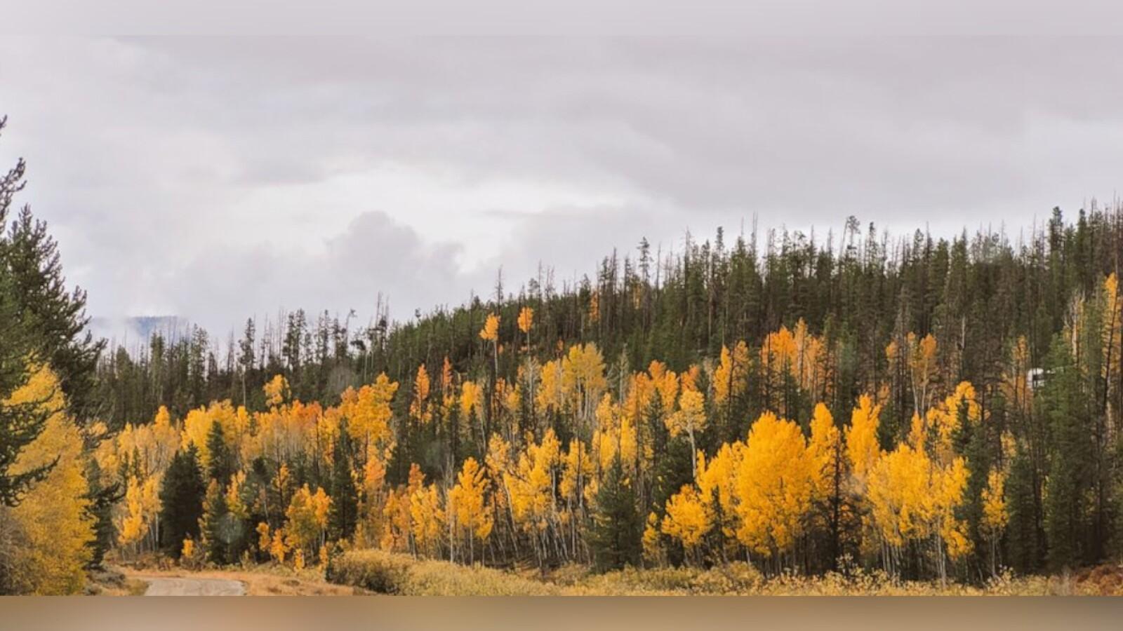 2Willow Creek Pass Road Dave Barrell.jpg