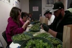 Montana less than 6 months away from recreational, adult-use marijuana sales