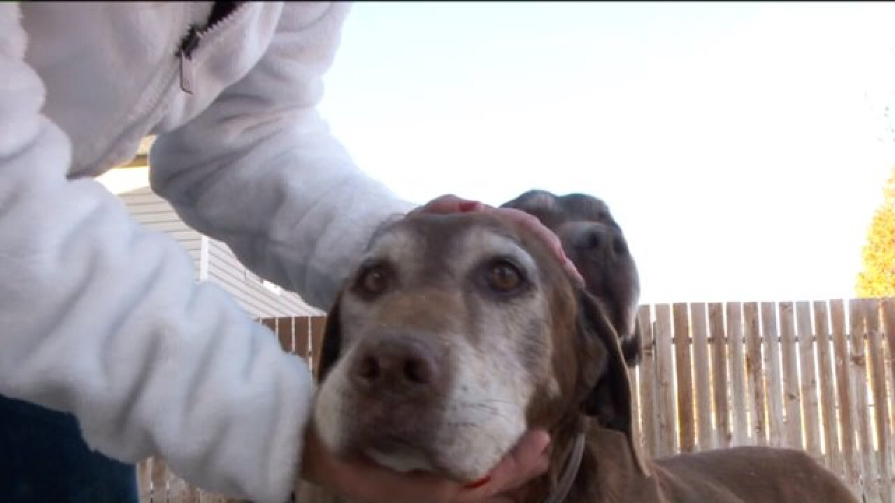 Dog returned to Lehi family after missing 6 weeks in Utah wilderness