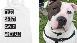 T-shirt raises money for Niagara County SPCA