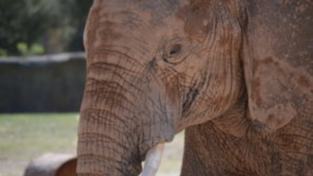 Elephant dies at Reid Park Zoo in Arizona