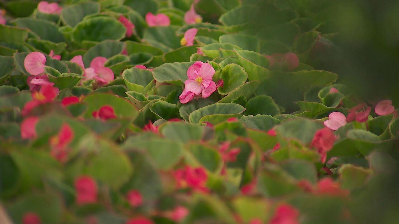 flowers generic