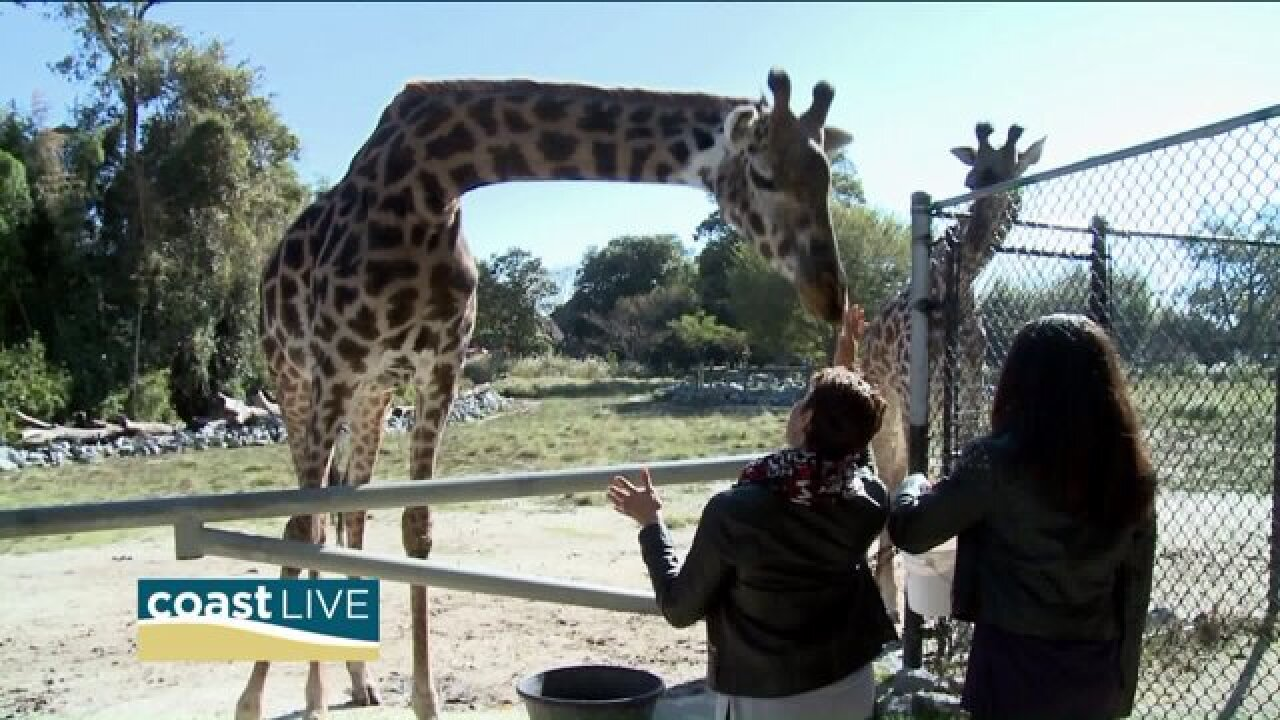 April takes a walk with the animals at the Virginia Zoo on CoastLive