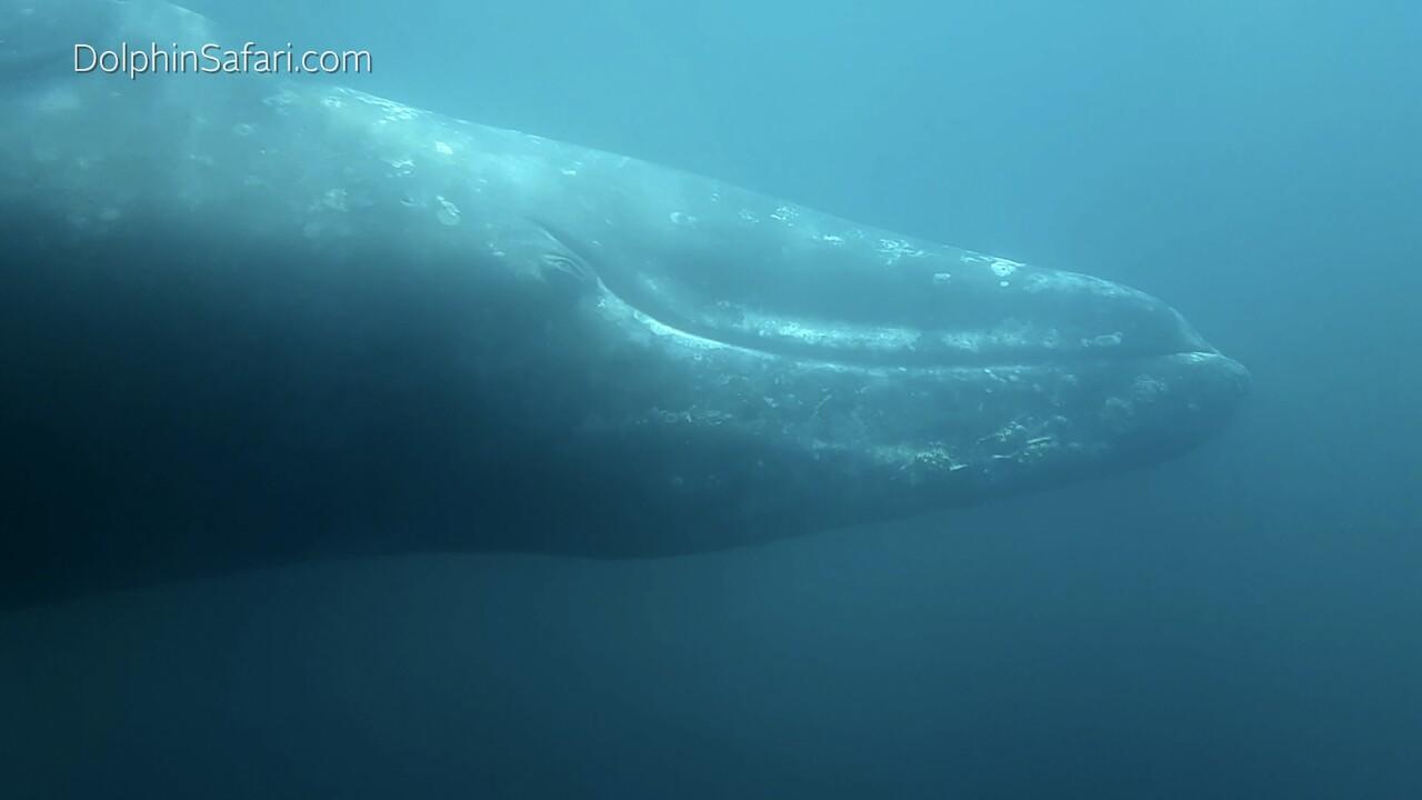 Whale Encounter California