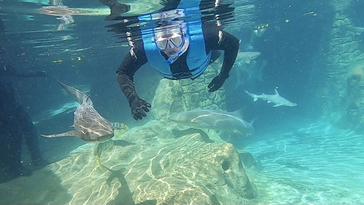 swim with sharks.jpg