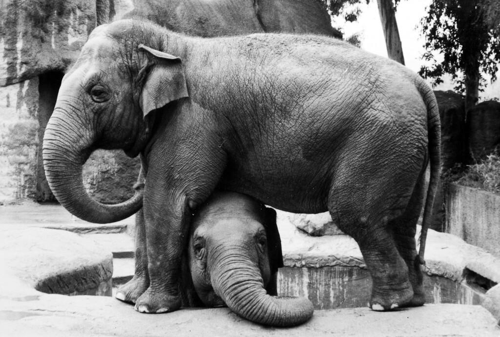 SB Zoo Sujatha at top 1970s.jpg