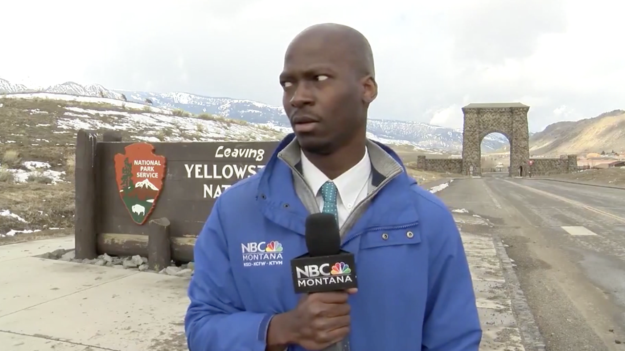 Bison hilariously interrupt Montana journalist's report
