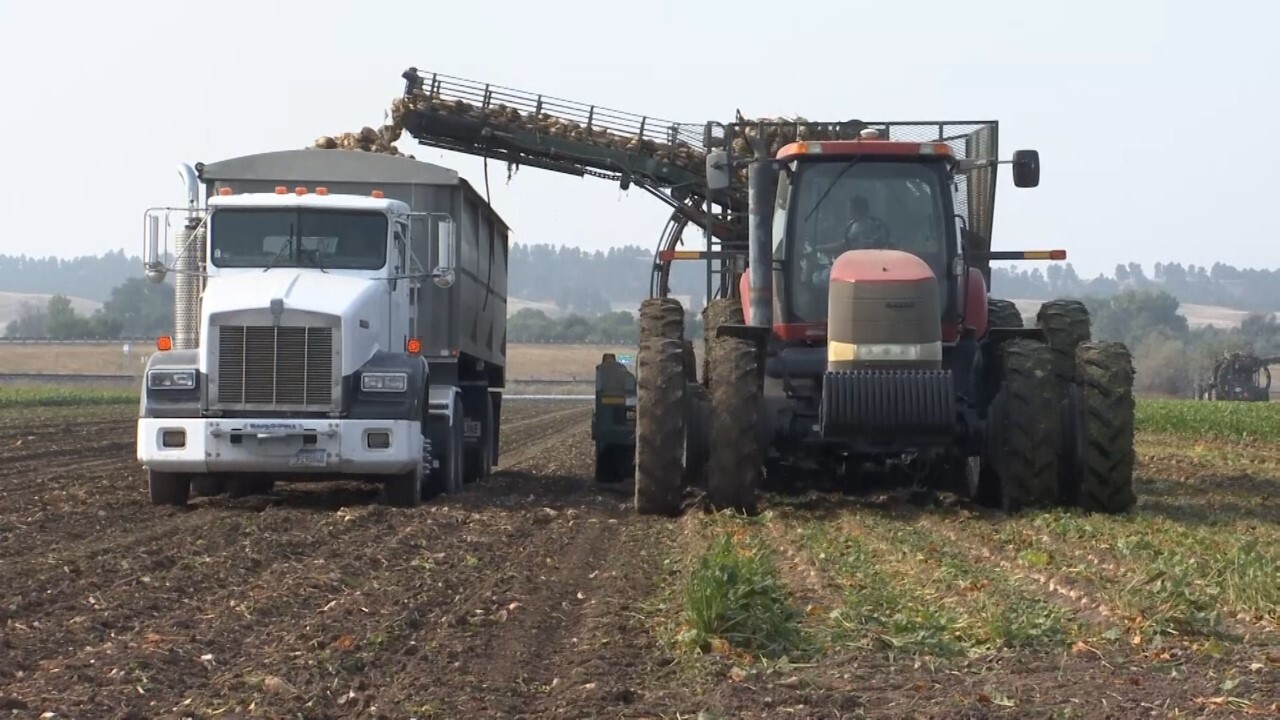 Montana Ag Network: Sugarbeet harvest underway in Montana and Wyoming