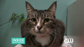 Paws and Claws: Adopt a New Furry FriendToday!