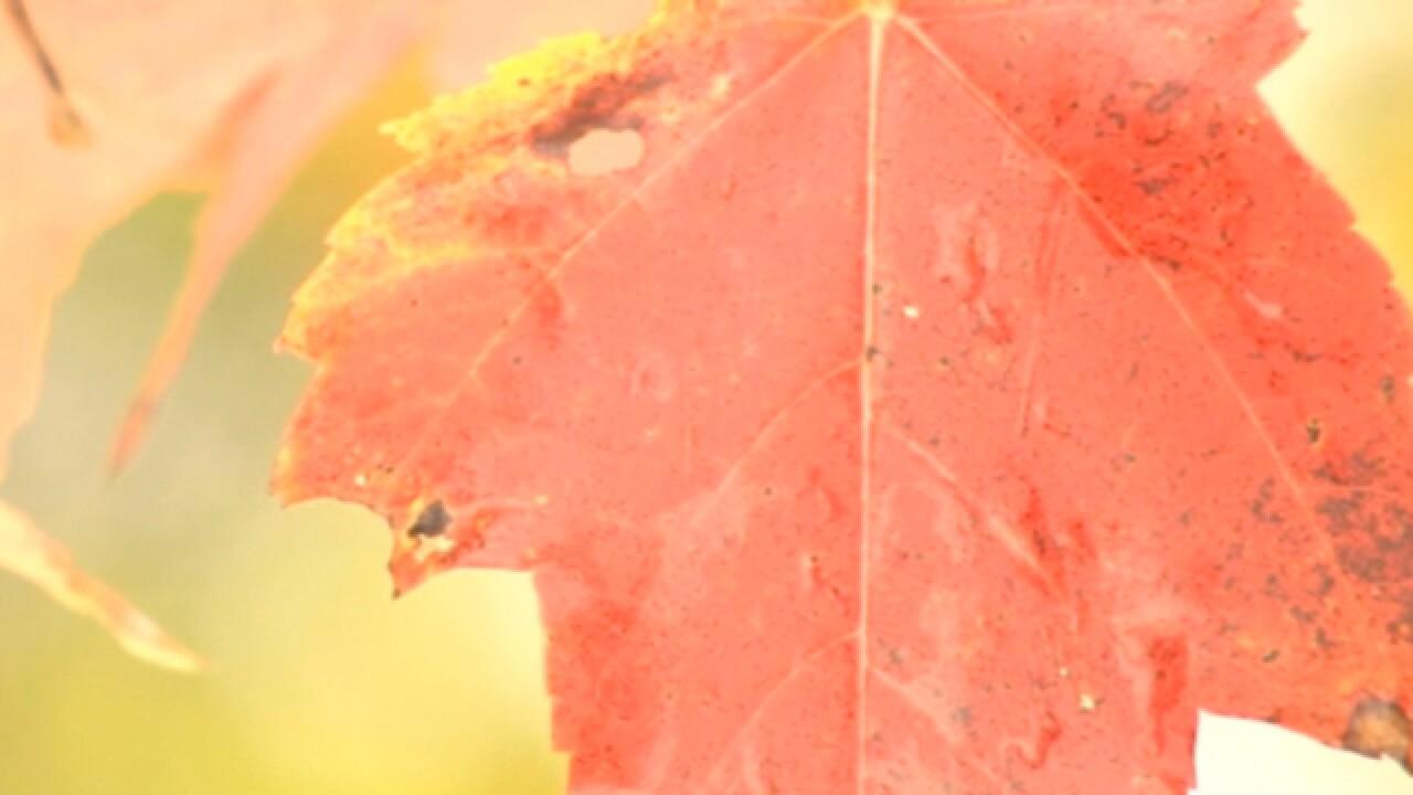 Most will taste fall in season's first full week