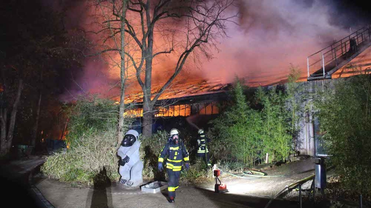 Scores of animals killed as fire tears through monkey enclosure at Germany's Krefeld Zoo