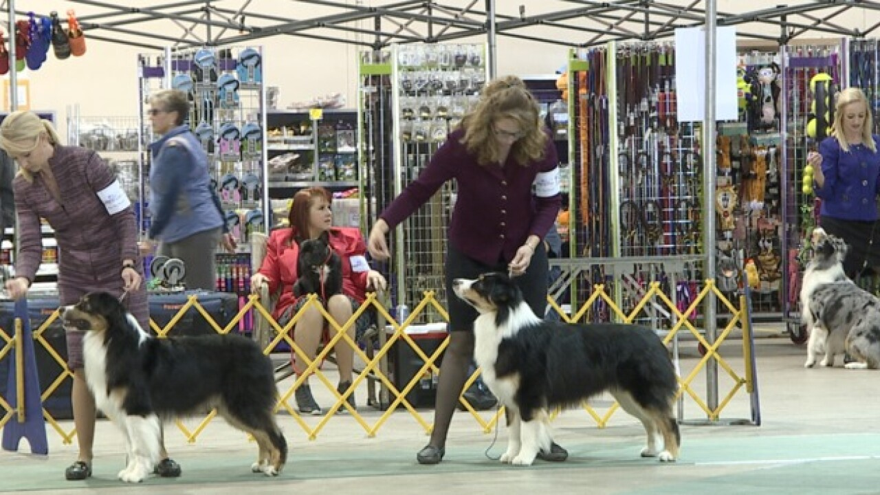 "Dogs compete for ""Best of Show"" at Expo Idaho's Dog Show"