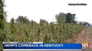 'SOTC': Hemp's Comeback In Kentucky