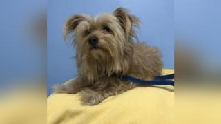 DOG-Humane-Society-of-Tampa-Bay.png