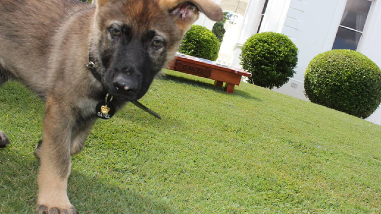 Police pup failed out for being to friendly