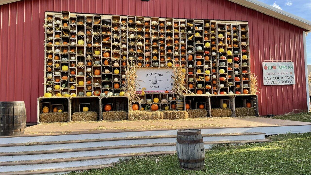 Mapleside Farms Pumpkin village