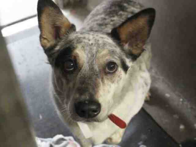 Adoptable pets from Maricopa County Animal Care and Control and Arizona Humane Society (11/15)