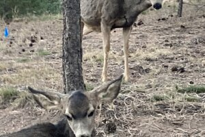 11-3-20 cpw deer 3.jpeg