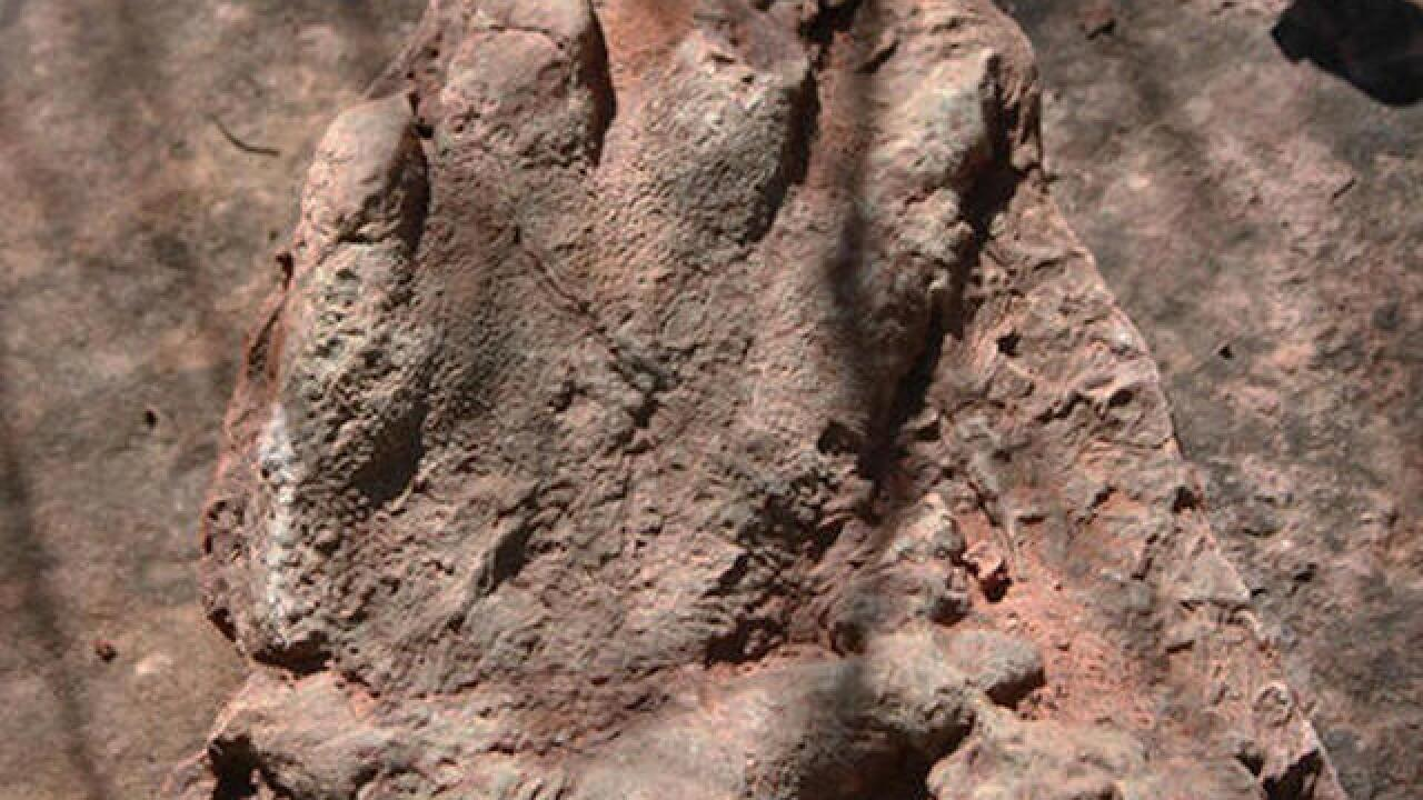 City trying to protect dinosaur tracks