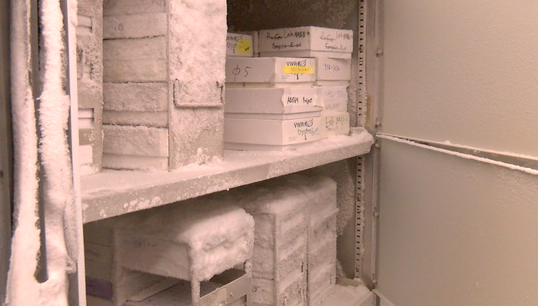 Many antibiotic-resistant bacteria were housed in this -80 degree freezer