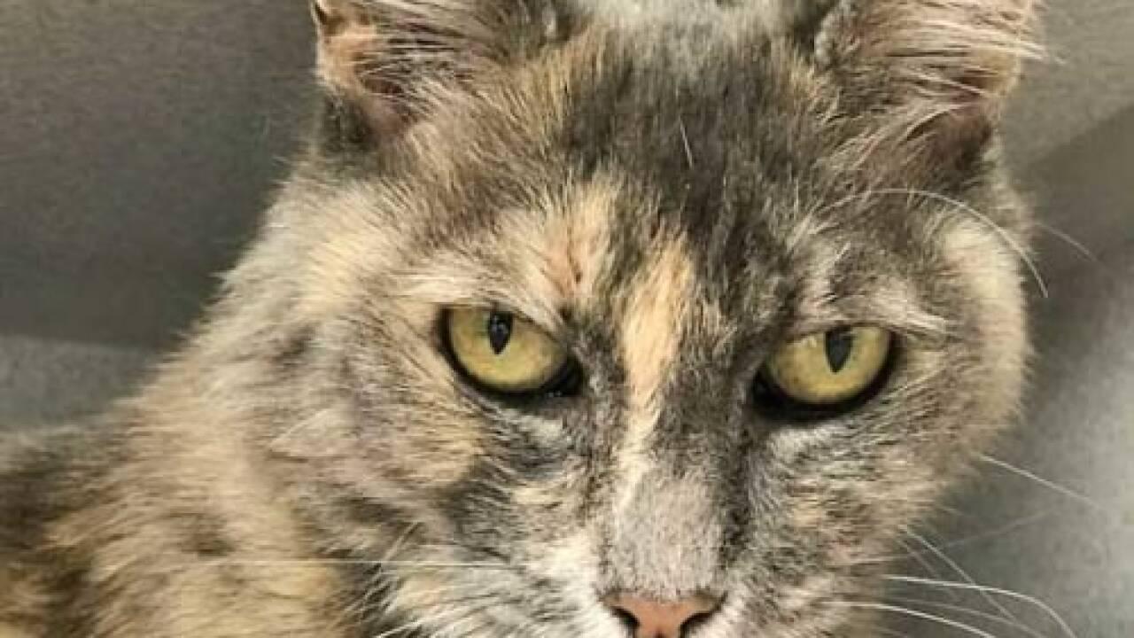 Pet of the Week - Nefertiti.jpg
