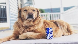 Your dog could be Keystone Light's next mascot and you'll get $10,000 and a year's supply of beer