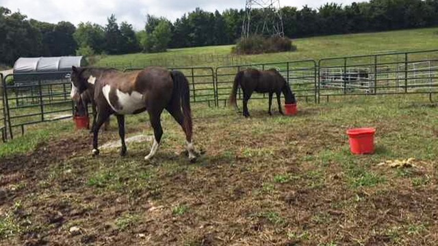 Photos: Horses Rescued From Robertson County