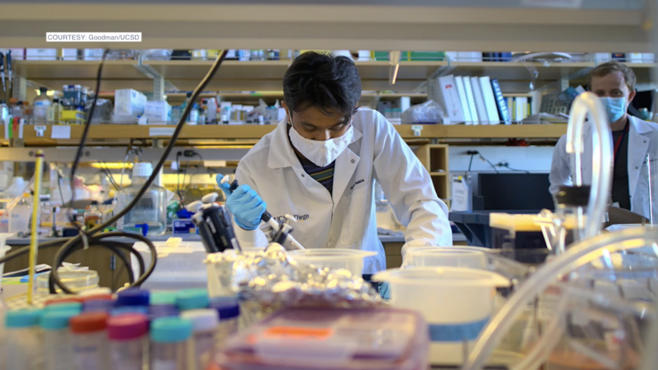 UC San Diego research points to new treatment options for COVID-19