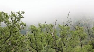Santa Margarita fog