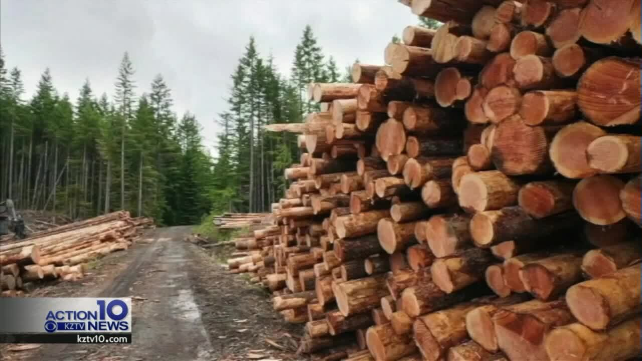 DWYM: Tumbling lumber prices don't necessarily mean cheaper houses