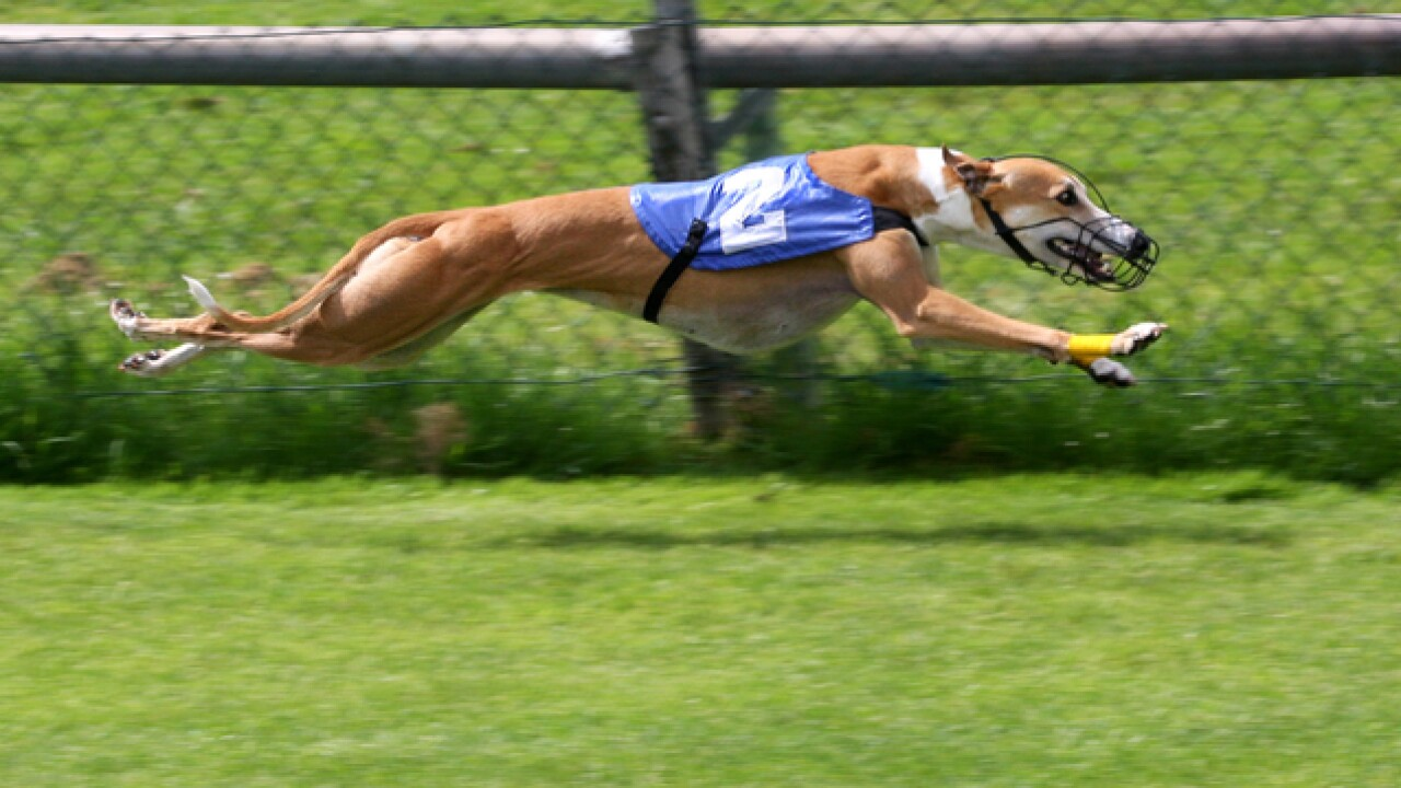 Future of Florida's greyhound racing on the line