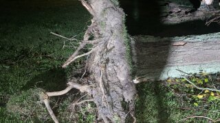 Kincaid Tree Down.jfif