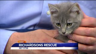 Paws for Pets – Richardsons Rescue