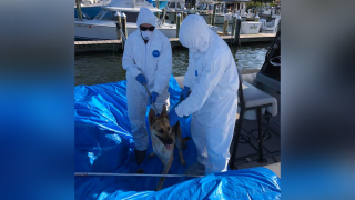 deputies-rescue-dog-from-boat-after-owner-gets-covid19.png