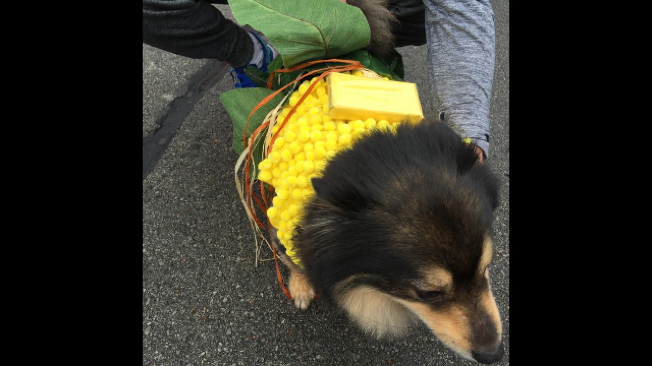25th Annual BooHaHa pet costume contest