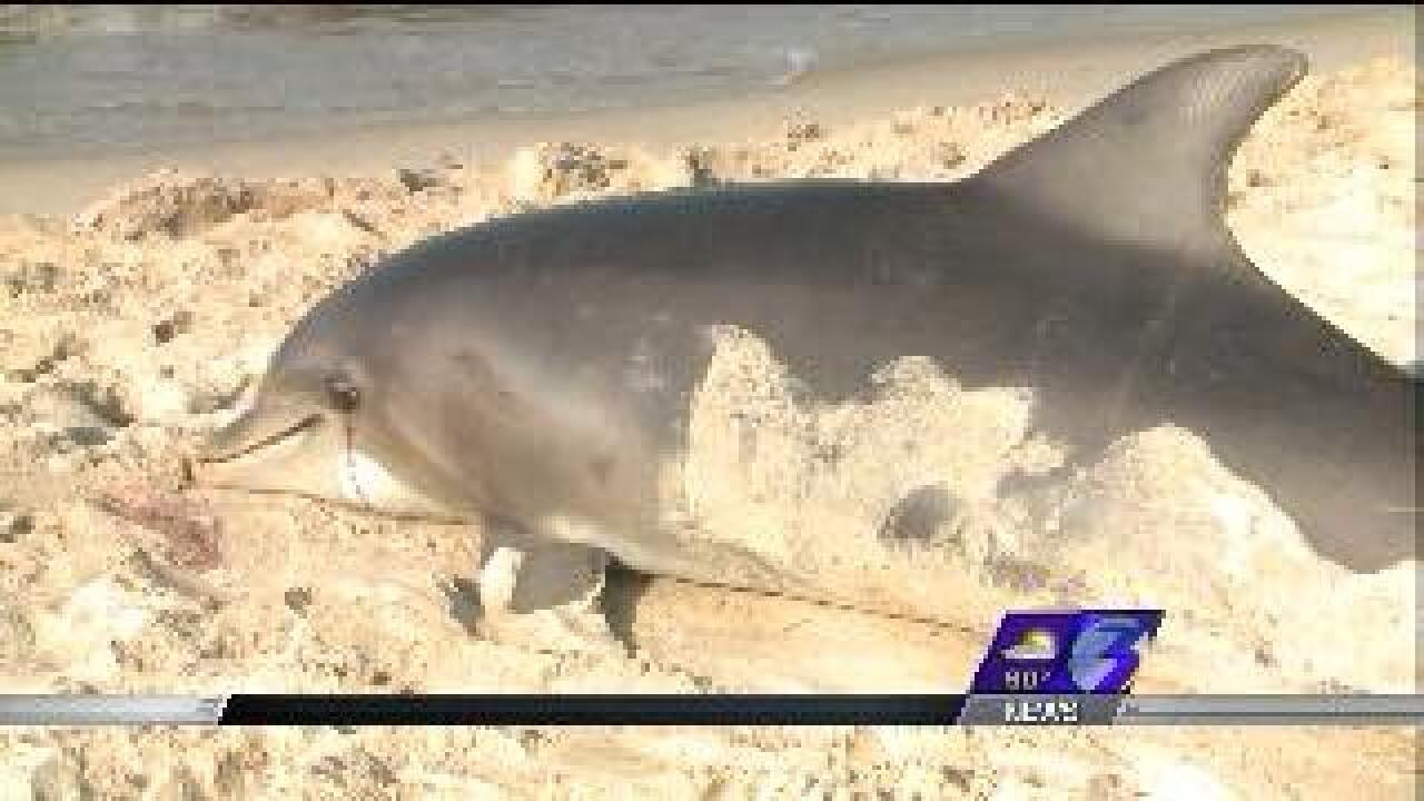 Stranding response team picks up deceased dolphin found on Ocean View beach