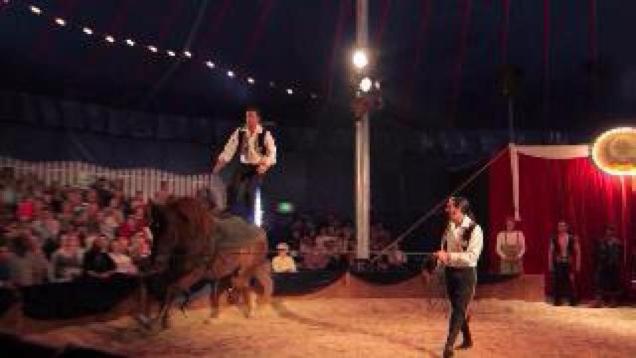 High Energy, Acrobatic Horse Show